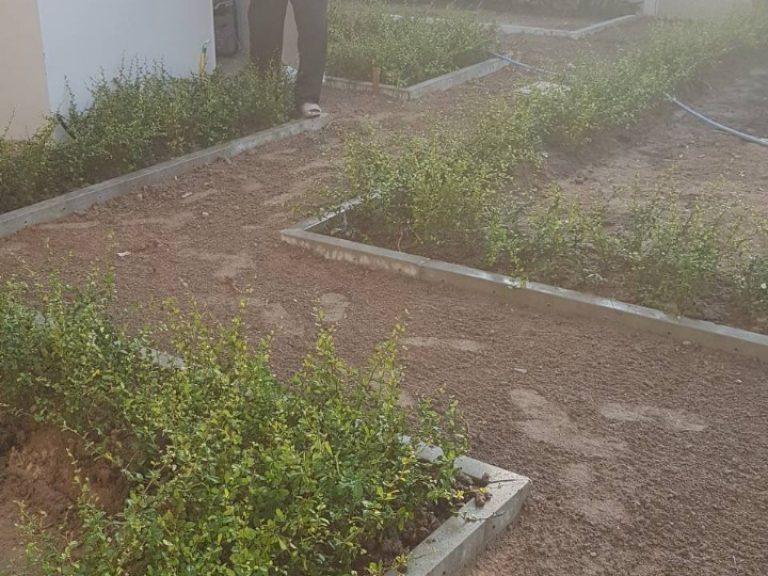 Garden_200324_0071